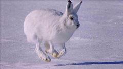 Sur la piste des animaux en hiver
