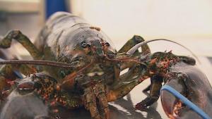 Pourquoi si peu de produits de la mer locaux dans nos assiettes?