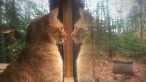 Chat roux qui regarde par la fenêtre