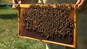 Les abeilles de Jean-Claude Picard