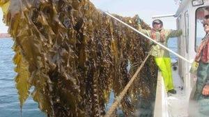 Algues et chercheurs sur un bateau