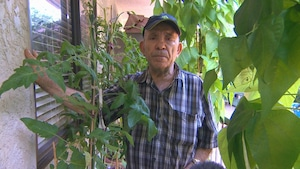 Un homme entouré de feuilles et de plants