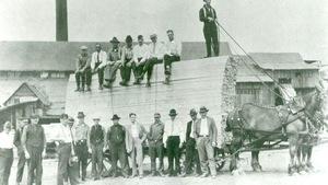Une vieille photo illustrant deux rangées d'hommes devant des planches de bois empilées, tirées par des chevaux.