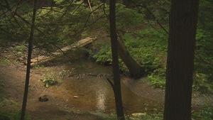 Le ruisseau Dodds dans le bois des Deux-Ruisseaux, à Sherbrooke