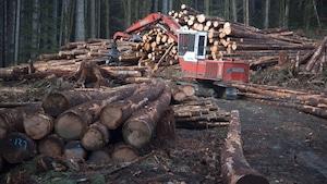 Photo d'ullistration de l'industrie forestière