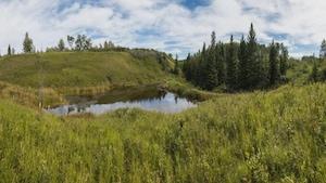 Un  petit lac entouré d'arbres et d'herbes sur un terrain vallonné.
