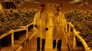 Le journaliste Julien Lecacheur visite l'usine de cannabis médical Aurora, à Cremona en Alberta
