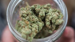 Tout ce qu'il faut savoir sur les règles entourant le cannabis au pays