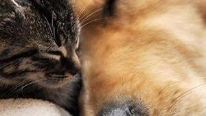 Un chat et un chien dorment collés l'un contre l'autre