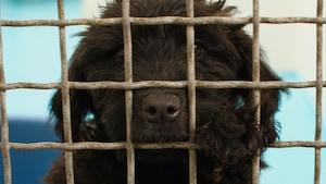 Un chiot regarde à travers une cage métallique