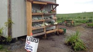 Légumes sur une étagère située près d'un champ.