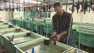 Adam Cook dépose un homard dans une cuve remplie d'eau