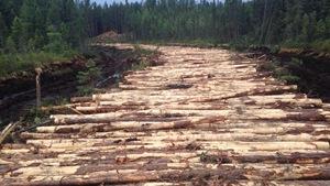 Le Conseil des Atikamekw d'Obedjiwan a réussi à faire suspendre les coupes forestières sur son territoire.