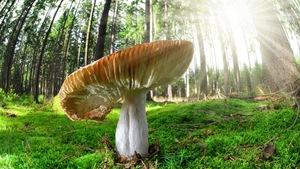 Le mycotourisme: une nouvelle tendance?