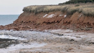 4 conseils écologiques pour lutter contre l'érosion des sols