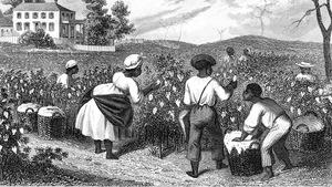 Illustration d'une plantation de coton de Caroline du Sud en 1873.