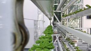 Les fermes verticales, l'agriculture de l'avenir?