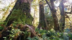 une femme dans une forêt regarde vers la cime d'arbres géants qui l'entourent