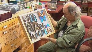 L'entomologiste Georges Brossard présente une partie de sa collection d'insectes.