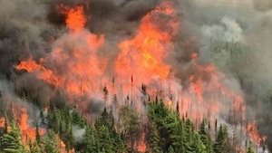 Un feu de forêt