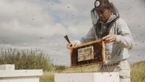 Gabriel Boucher-Guimond est un apiculteur qui se spécialise en élevage de reines.