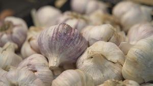 Les gousses d'ail du Québec sont de plus en plus populaires.