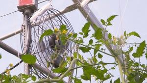 Système de ventilation dans une petite serre.