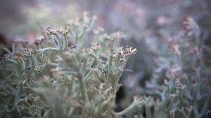 Vue très rapprochée d'un lichen.