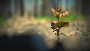 Un jeune plan d'arbre parvient à pousser dans un sol pauvre.