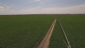 La famille Wiebe a augmenté d'un autre 200 hectares la superficie semée en pommes de terre.