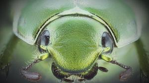 Photographie d'un insecte.