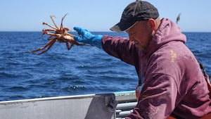 Photo de l'homme de pont, David Jones, jetant le crabe par dessus bord.