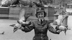 Martha Arsenault est photographiée dans son uniforme d'aviatrice, entourée de pigeons à Trafalgar Square