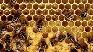 Créer les abeilles de demain