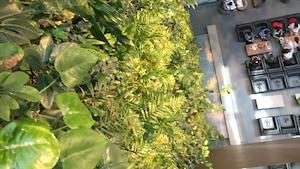 Des plantes accrochées à un mur