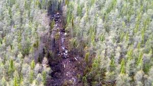 Une forêt séparée au beau milieu par des débris