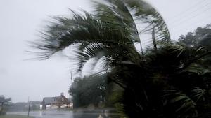 Des palmiers sont violemment secoués par le vent et la pluie.
