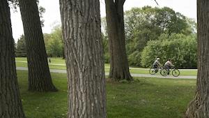Des troncs d'arbres au premier plan et deux cyclistes au second plan.
