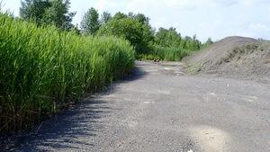 Le groupe de citoyens Sauvons l'Anse-à-l'Orme estime que du remblai illégal a été fait sur le site. On voit sur la photo à gauche, des roseaux, et à droite une montagne de gravier.