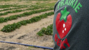 chandail affichant le nom de la compagnie Prairie Berry avec un champ de fraises en arrière-plan