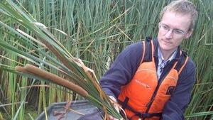 Le chercheur Richard Grosshans dans un marais avec des quenouilles.