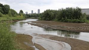 Des oiseaux profitent des bancs de sable présents dans le lit la rivière à cause du bas niveau de l'eau.