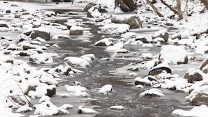 Un ruisseau enneigé