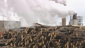 Des troncs d'arbres entassés près d'une usine