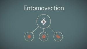 Les insectes transportent des spores.