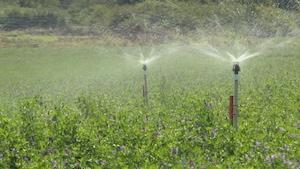 Arroser les champs de plantes fourragères