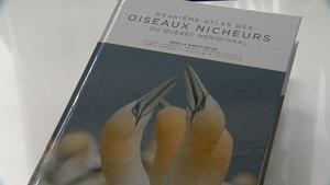 Page couverture du livre Deuxième atlas des oiseaux nicheurs du Québec méridional.