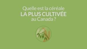 Image infographique avec la question «Quelle est la céréale la plus cultivée au Canada?»