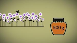 Images infographique d'une abeille qui butine et un pot de miel.