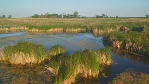 Herbes hautes sur le bord du marais Delta, au sud du lac Manitoba.